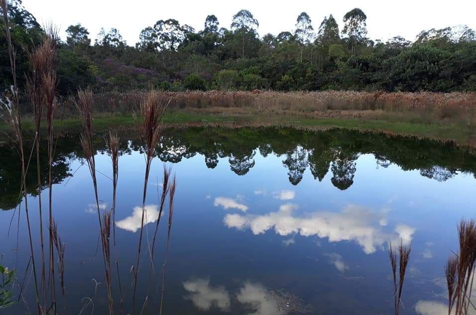 Concurso recebe fotos da área de Cerrado da UFSCar (Foto: Trilha da Natureza)