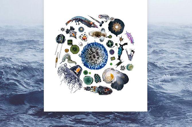 UFSCar participa de projeto internacional em microbioma do oceano